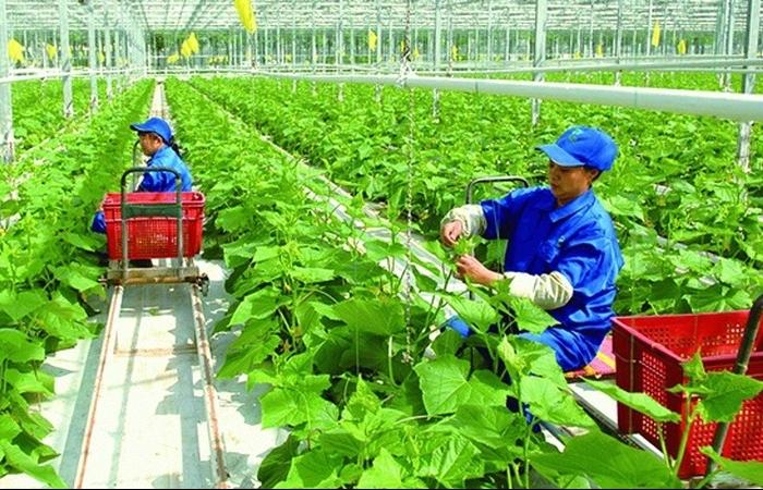 Thủ tướng đồng ý kéo dài chính sách hỗ trợ bảo hiểm nông nghiệp