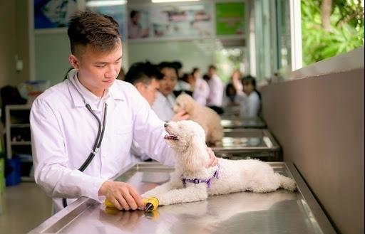 Dự kiến lệ phí cấp chứng chỉ hành nghề dịch vụ thú y sẽ được giảm 50%