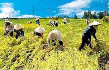 Bảo hiểm nông nghiệp: Mục tiêu giúp GDP nông nghiệp tăng 3%/năm