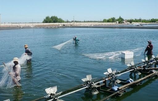 Xây dựng mức thu phí, lệ phí mới trong quản lý chất lượng vật tư nuôi trồng thủy sản