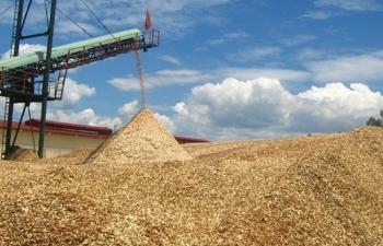 Quản chặt hoàn thuế giá trị gia tăng mặt hàng dăm gỗ, gỗ thành phẩm