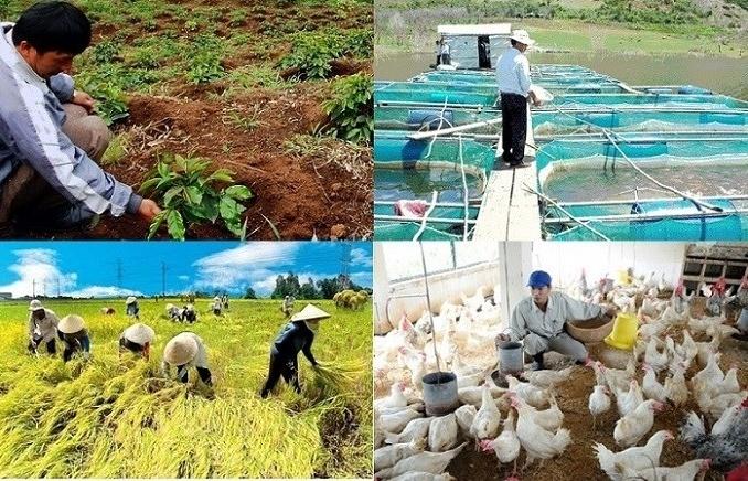 Cây trồng, vật nuôi gặp rủi ro sẽ được hỗ trợ bảo hiểm nông nghiệp
