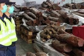 Hơn 7 tấn gỗ đàn hương đỏ trong lô hàng ghế sofa