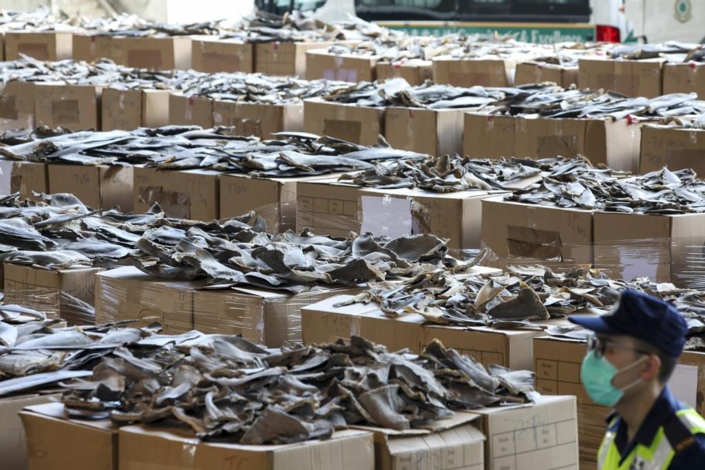 Thu giữ 26 tấn vây cá mập