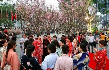 Chuẩn bị đưa 20.000 cành hoa anh đào Nhật Bản về Hà Nội