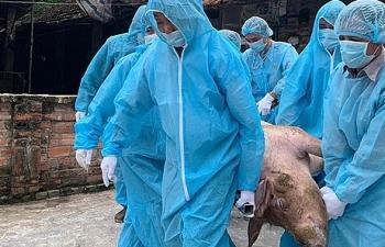 Thông tin vứt lợn dịch bừa bãi là không chính xác