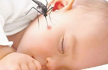 Hà Nội: Dịch sốt xuất huyết tăng nhanh
