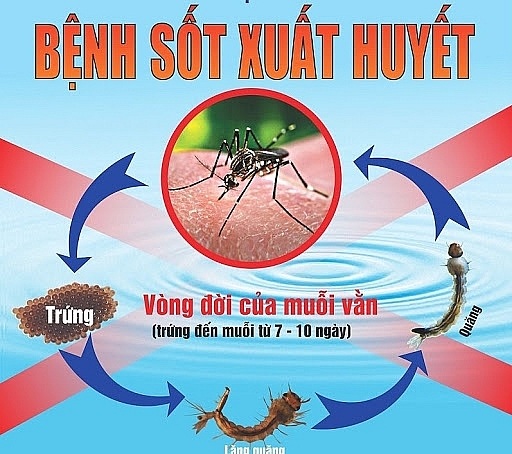 Hà Nội: Tăng số ca mắc sốt xuất huyết