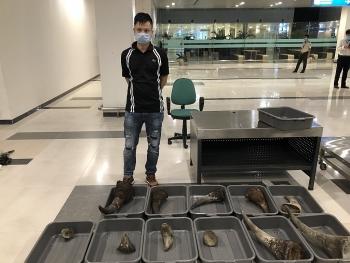 Khởi tố hình sự vụ vận chuyển sừng tê giác về Việt Nam qua sân bay Cần Thơ
