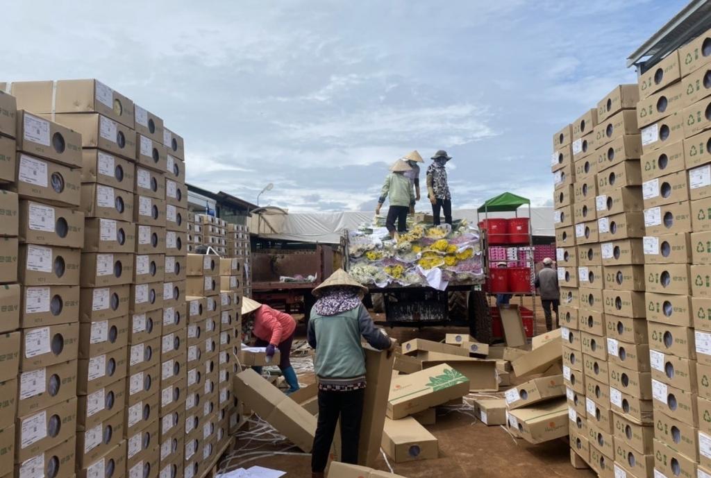 Tiêu hủy hơn 600.000 cành hoa chuẩn bị xuất khẩu vì vướng quản lý chuyên ngành