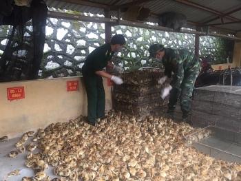 Thu giữ 5.500 con gia cầm giống không rõ nguồn gốc xuất xứ