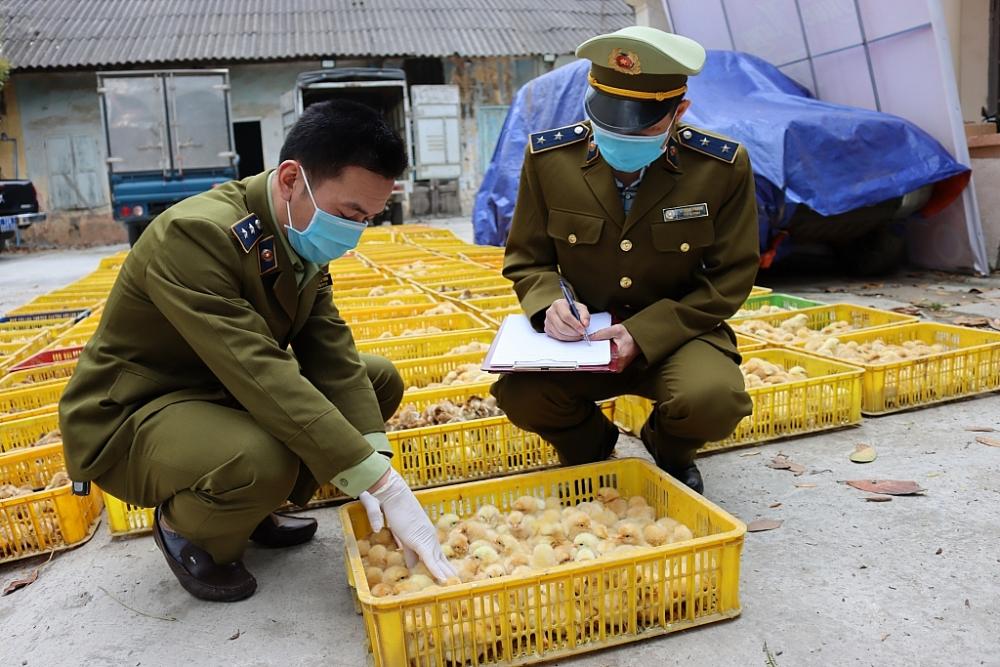 Lực lượng chức năng kiểm tra số tang vật. Ảnh: QLTT LS