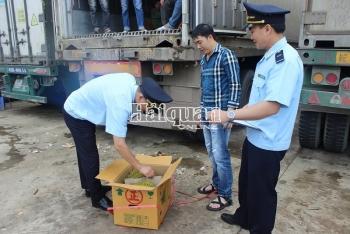 Hải quan Lạng Sơn: Trực làm việc 24/24 hỗ trợ cho vải quả XK