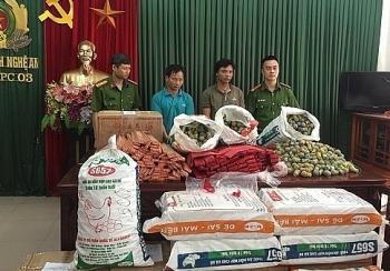 Khởi tố hai đối tượng vận chuyển gần 600 kg pháo nổ ở Nghệ An