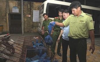 Hải quan Cầu Treo phối hợp bắt 140 kg tê tê từ Lào về Việt Nam