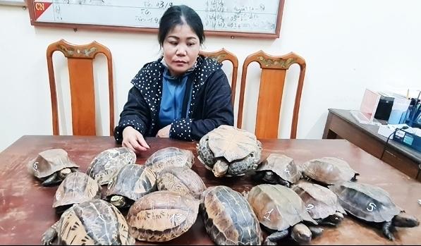 Hà Tĩnh: Tạm giữ người phụ nữ vận chuyển 12 kg cá thể rùa