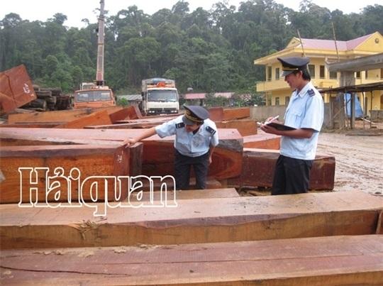 Triển khai thực hiện các quy định hệ thống bảo đảm gỗ hợp pháp