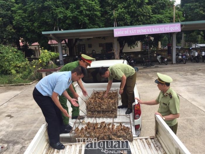 Hải quan Chi Ma chủ trì bắt giữ 14.200 con gia cầm giống