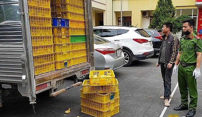 Tổ công tác Công an huyện Cao Lộc phát hiện, bắt giữ 9.900 con vịt giống nhập lậu