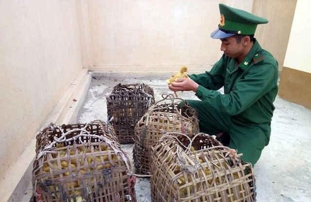Lạng Sơn tiếp tục phát hiện bắt giữ gia cầm lậu