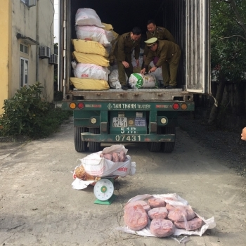 Bắt giữ xe container chở gần 12 tấn nội tạng động vật bốc mùi hôi thối