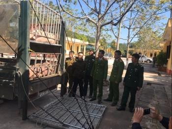 LạngSơn:Chặn đứng gần 2,5 tấn thịt lợn xuất lậu qua biên giới
