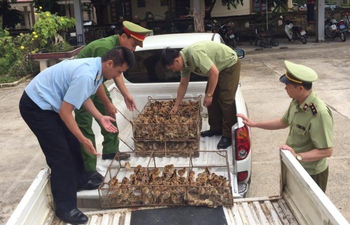 Lạng Sơn quyết liệt ngăn chặn vận chuyển trái phép gia cầm, sản phẩm gia cầm qua biên giới