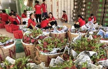 Lo ùn ứ trái cây đi Trung Quốc, Bộ Công Thương vội khuyến cáo