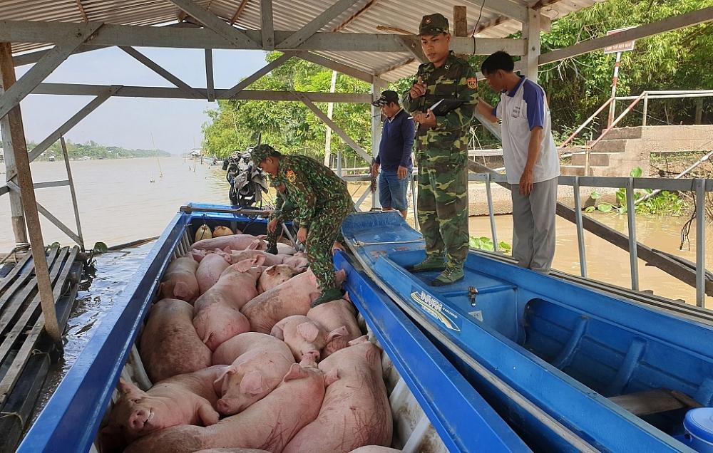 Xử nghiêm nhập lậu, buôn bán trái phép lợn, sản phẩm lợn