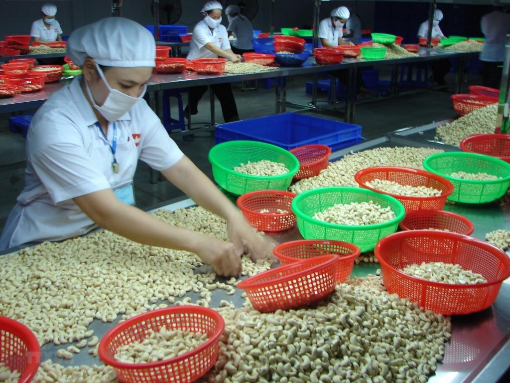 Nga tăng mạnh nhập hạt điều Việt Nam dù giảm ở nhiều thị trường