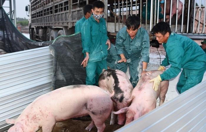 Mức thu, quản lý và sử dụng phí trong chăn nuôi