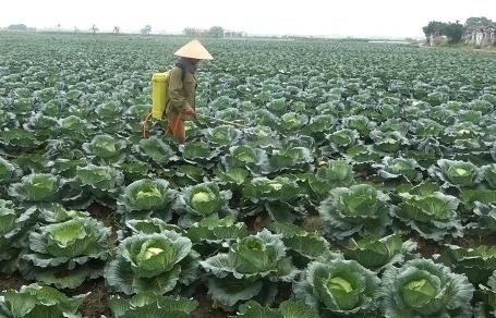 Nông dân Hải Dương, Quảng Ninh điêu đứng vì Covid-19, Bộ NN&PTNT lên tiếng gấp