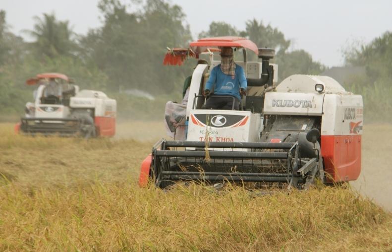 Xuất khẩu gạo thụt lùi đầu năm nhưng sẽ thắng lợi cả năm?