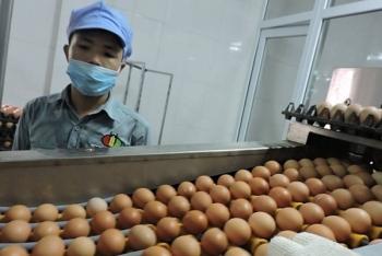 Nhập khẩu bao nhiêu trứng và muối trong 2019?