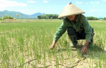 Việt Nam được viện trợ 30,2 triệu USD chống biến đổi khí hậu