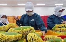Cung ứng nội địa, Việt Nam vẫn dư dả rau quả xuất khẩu