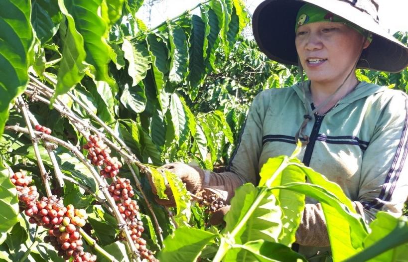 Giá xuất khẩu nhiều nông sản chủ lực tăng vùn vụt