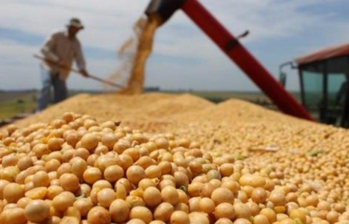Doanh nghiệp cần tính kỹ việc nhập khẩu nguyên liệu thức ăn chăn nuôi