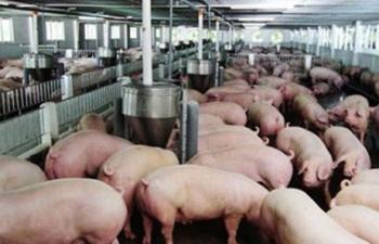 Xét nghiệm Dịch tả lợn châu Phi mất tới 500 nghìn đồng/mẫu