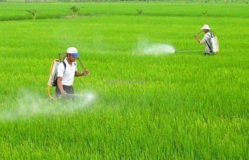 Loại Glyphosate khỏi danh mục thuốc bảo vệ thực vật được phép sử dụng