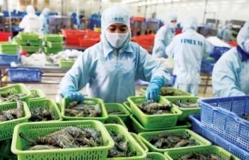 Tôm Việt bị cạnh tranh khốc liệt tại thị trường Nhật Bản