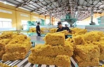 Trung Quốc kích thích kinh tế, giá cao su tăng trở lại?