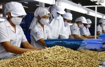 Từ tháng 5, hạt điều nhập khẩu từ châu Phi hết khó kiểm dịch