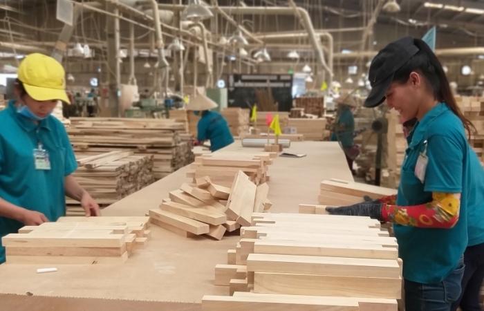 Doanh nghiệp gỗ lo mất thị trường xuất khẩu vì chậm