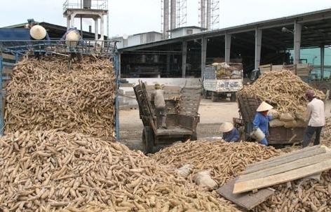 Xuất khẩu sắn tăng gần 100% tháng đầu năm