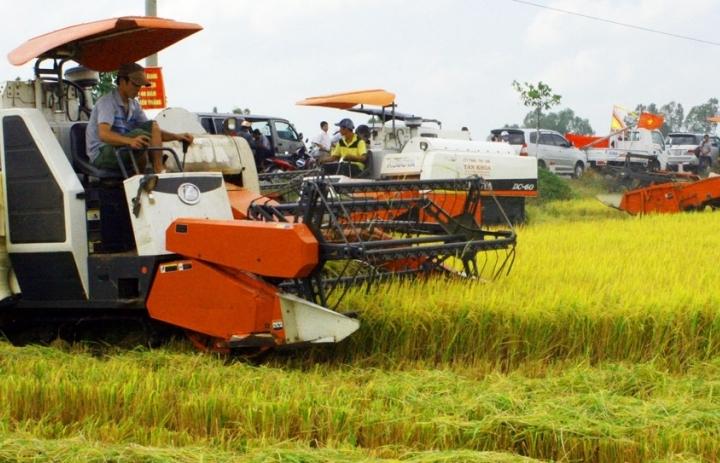 Đề nghị hỗ trợ lãi suất cho doanh nghiệp thu mua thóc, gạo tại ĐBSCL