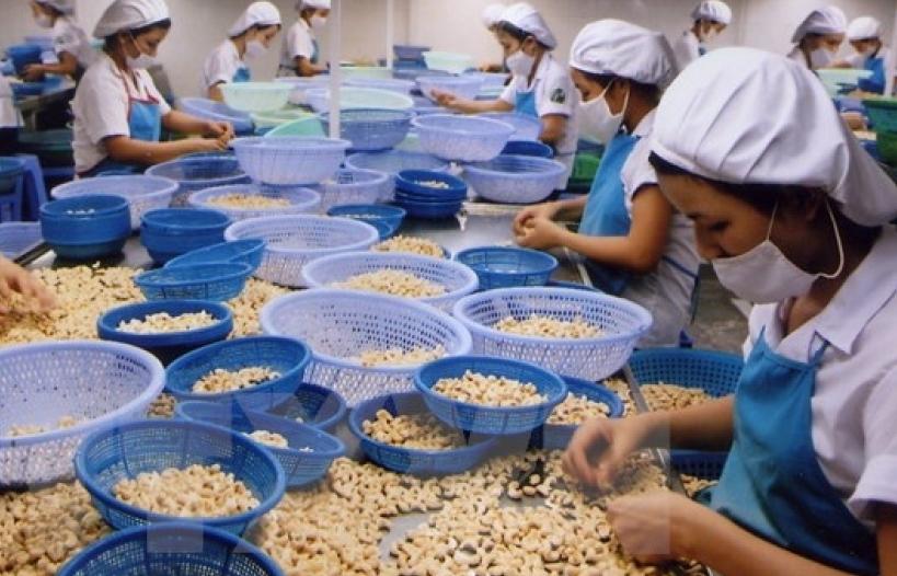 Xuất khẩu điều nhân khởi sắc khi Mỹ, Trung Quốc tăng mua