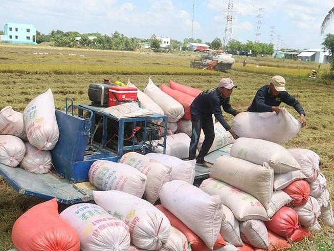 Giá cao nhất nhiều năm, gạo Việt có cơ hội