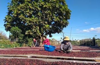 Tiêu thụ giảm, giá cà phê trì trệ đến khi nào?
