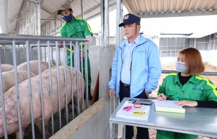 Bất thường giá lợn giảm sâu cận Tết